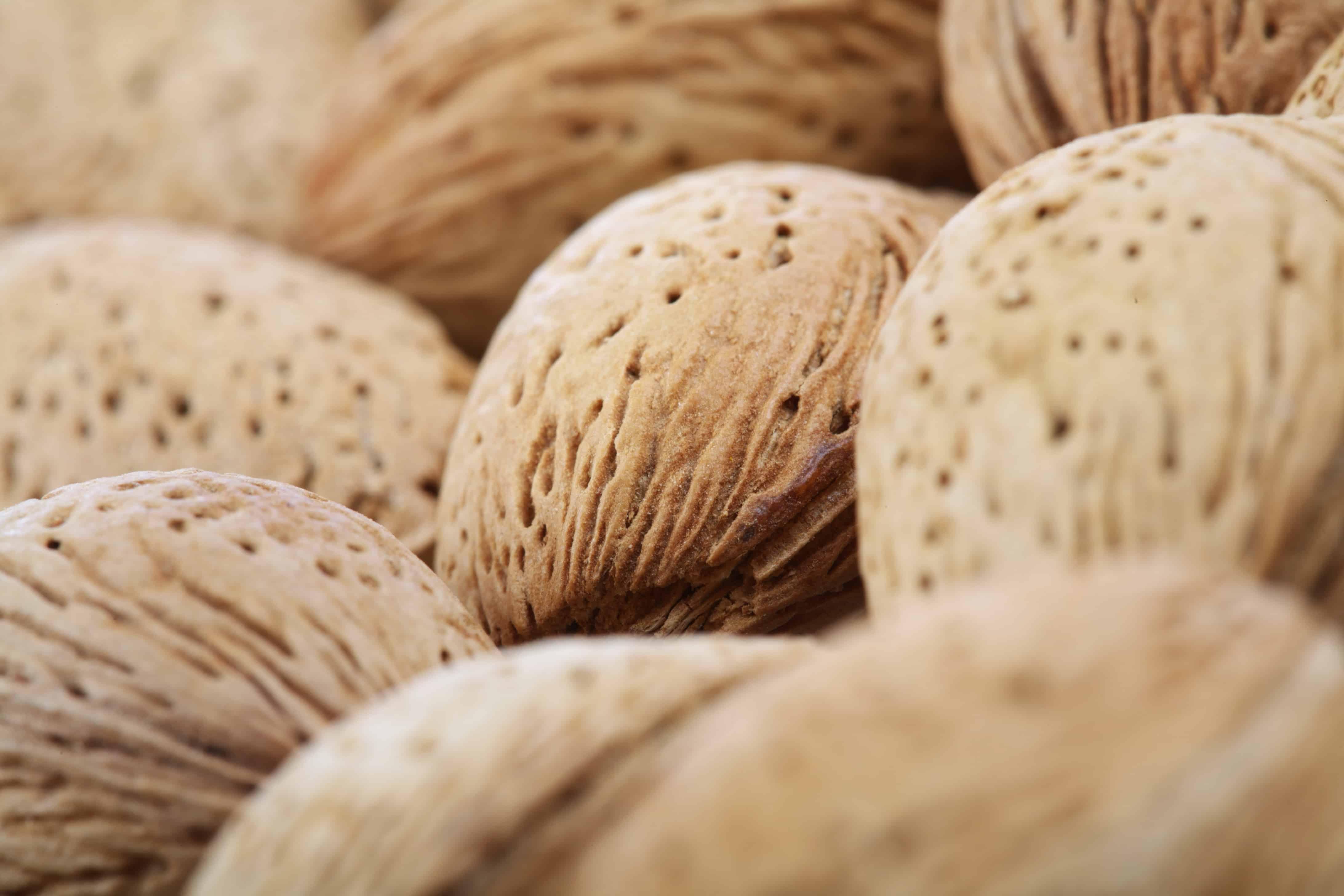 low carb diet nuts
